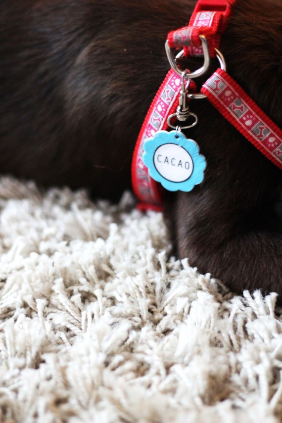 DIY | Dogtag