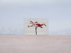 Inspirational Tuesday | Tree