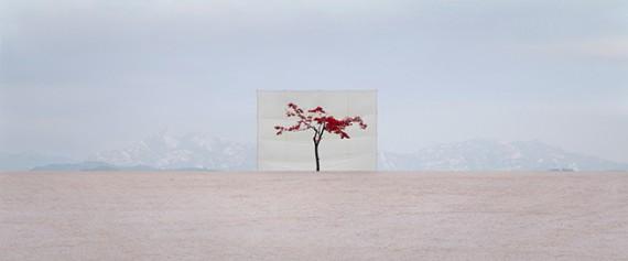Inspirational Tuesday   Tree