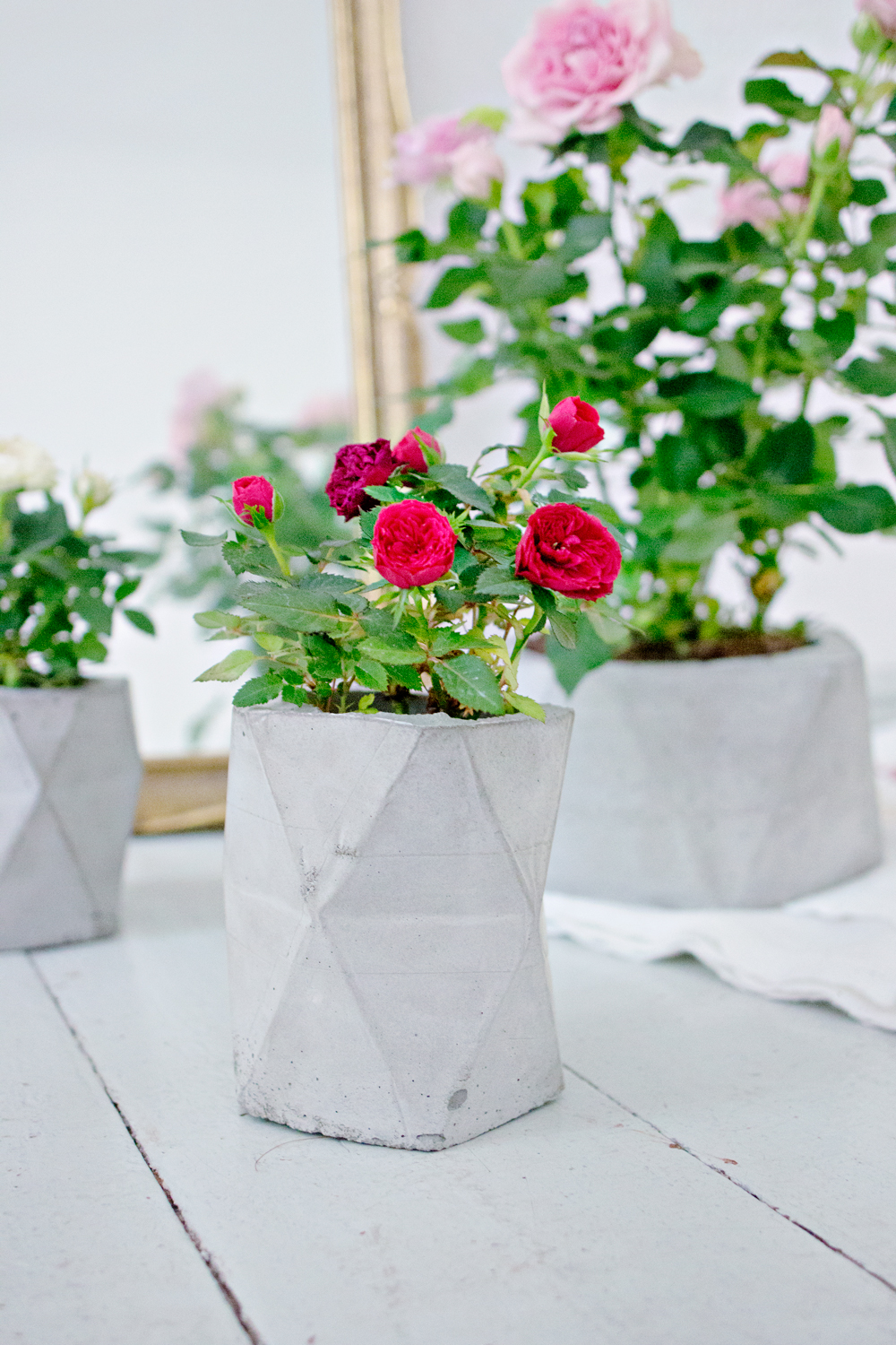DIY | Concrete Planter